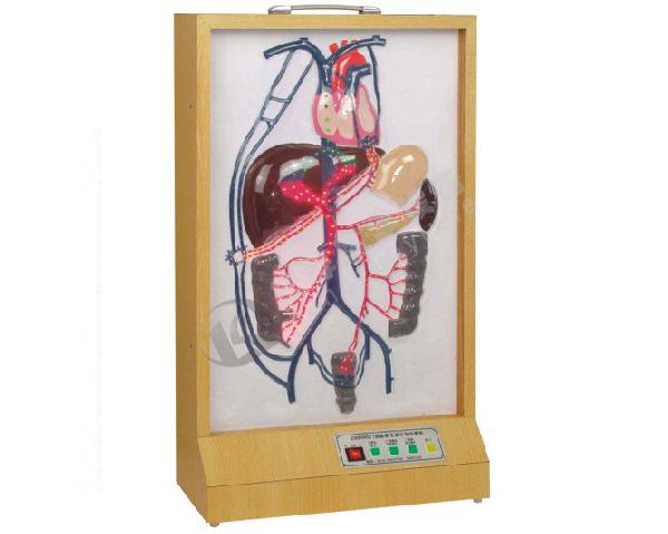 电动门静脉侧支循环模型