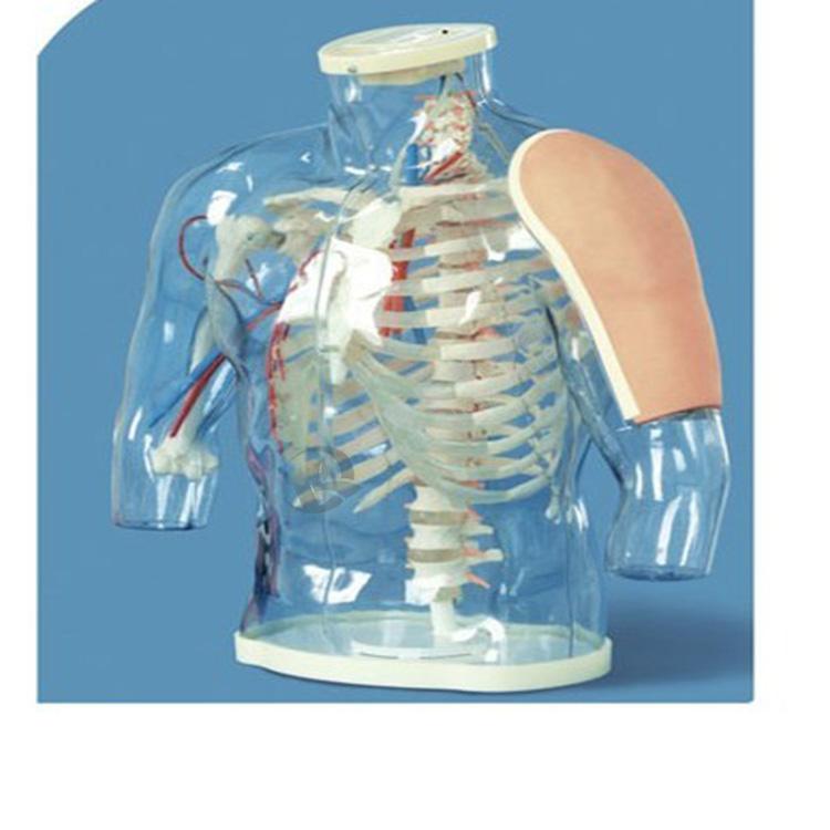高级上臂肌肉注射及对比模型(警示系统)