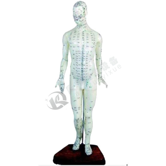 高46cm 人体针灸模型(男性)