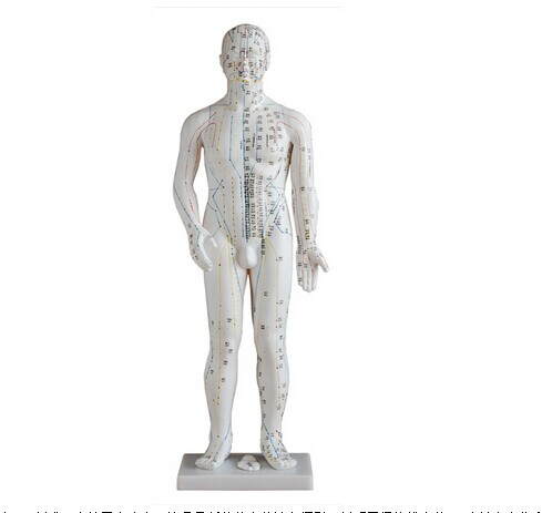 人体针灸模型 70CM